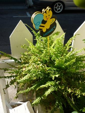 Cute honey bee accompanied by well grown ferns