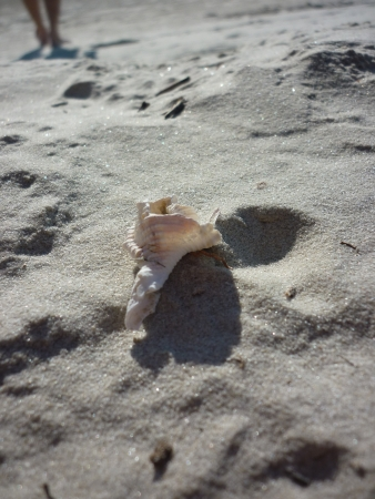 Hermit crabs temporary shelter - the shell