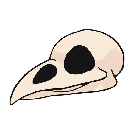 Bird skull cartoon vector illustration motif set. Hand drawn isolated avian bone elements clipart for nature blog, natural history bone skeleton graphic, anatomy education web buttons.