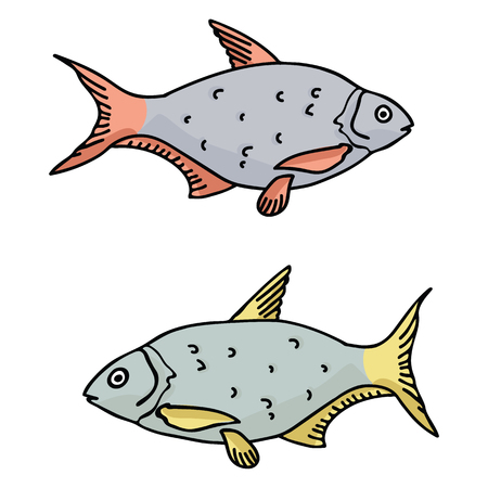 Realistic roach cartoon vector illustration motif set. Hand drawn goatfish elements clipart for marine life blog, fish graphic, aquatic web buttons.