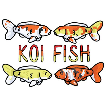 Cute decorative koi fish vector illustration. Oriental marine typography clipart.