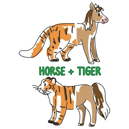 Childish tiger and horse animal splice vector illustration. Hand drawn doodle inked wildlife animal creature mixture, feline and equine monster clipart.