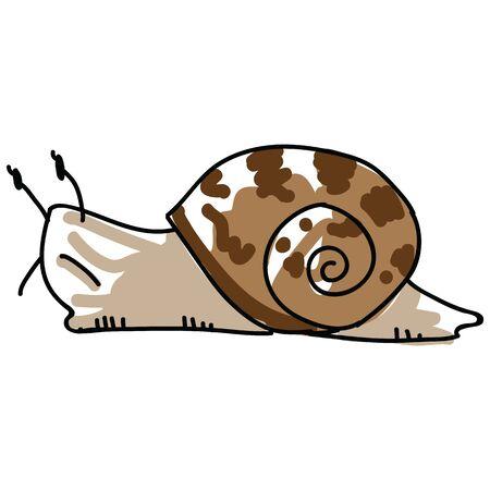 Illustration vectorielle d'escargot de jardin fragmentaire. Clipart de mollusque de la faune de la cour dessiné à main levée. Griffonnage de coquille de gastéropode. Vecteurs