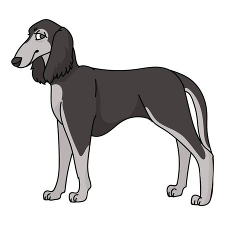 Cute cartoon saluki dog breed vector clipart. Pedigree kennel doggie breed for dog lovers. Purebred domestic puppy for pet parlor illustration mascot. Isolated canine borzoi hound.