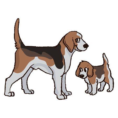 Niedliche Cartoon-Foxhound-Jagdhund und Welpen-Vektor-Clipart. Stammbaum-Zwinger-Hündchenzucht für Hundeliebhaber. Reinrassiges Hündchen für Tiersalon-Illustrationsmaskottchen. Isolierter Hundehund.