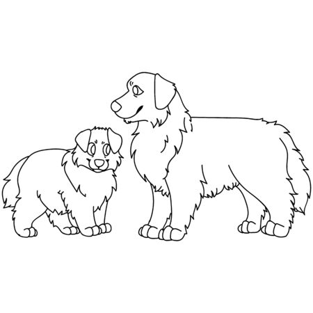 Cute carton Australian Shepherd dog and puppy breed clipart. Pedigree kennel doggie for dog lovers.