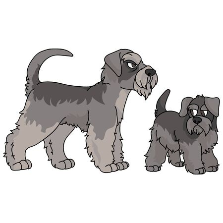 Cute cartoon schnauzer dog clipart. Pedigree kennel doggie breed for dog lovers. Purebred domestic dog and puppy terrier for pet parlor illustration mascot.