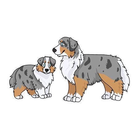 Cute cartoon australian shepherd dog and puppy vector clipart. Pedigree kennel doggie breed for dog lovers. Purebred domestic for pet parlor illustration mascot. Isolated canine English hunting breed.
