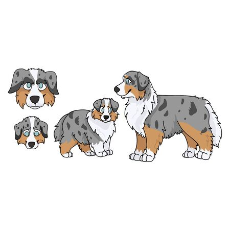 Cute cartoon australian shepherd dog and puppy set vector clipart. Pedigree kennel doggie breed for dog lovers. Purebred domestic puppy for pet parlor illustration mascot. English hunting breed.