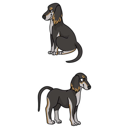 Cute cartoon Saluki puppy vector clipart. Pedigree borzoi dog for kennel club. Purebred domestic sighthound dog training for pet parlor illustration mascot. isolated canine breed.