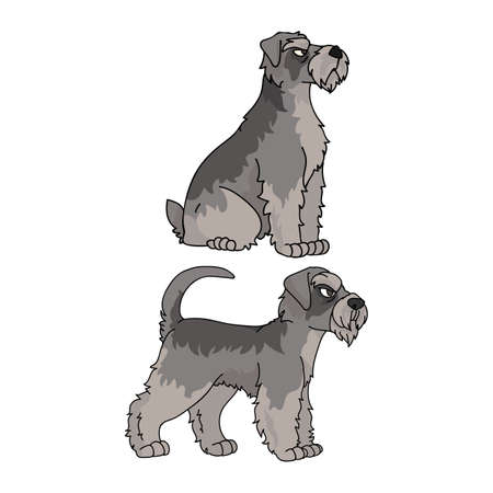 Cute cartoon Schnauzer dog vector clipart. Pedigree kennel doggie breed for kennel club. Purebred domestic puppy training for pet parlor illustration mascot. Isolated canine breed.