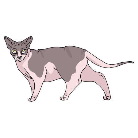 Cute cartoon sphynx cat vector clipart. Pedigree exotic kitty breed for cat lovers. Purebred domestic kitten for pet parlor illustration mascot. Isolated hairless feline housecat.
