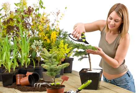 Gardening - woman trimming bonsai tree with prunning shears on white background Stock Photo
