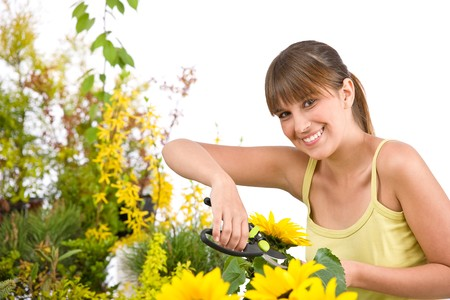 pruning shears: Gardening - woman cutting sunflower with pruning shears on white background
