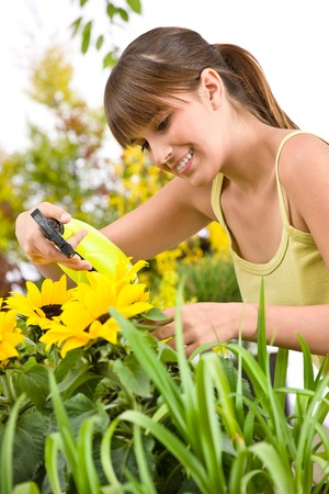 Gardening - woman sprinkling water on sunflower blossom on white background photo