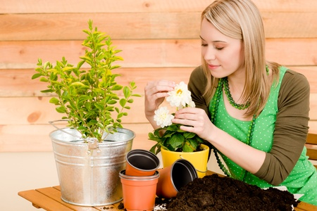 Gardening woman planting spring flower on terrace photo