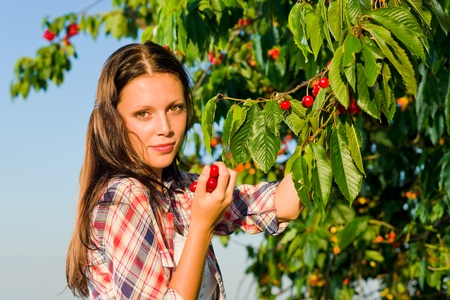 picking hand: Cherry tree beautiful woman picking branch summer sunny day Stock Photo