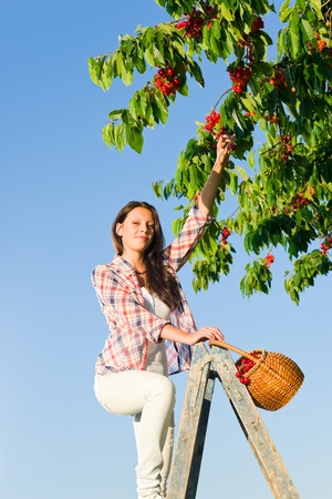 Cherry tree beautiful woman harvest summer  sunny countryside on ladder photo