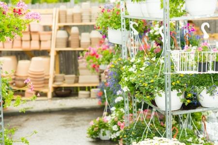 gamme de produit: Hangup pots avec des fleurs dans les plantes de jardin �tag�res � effet de serre du centre Banque d'images