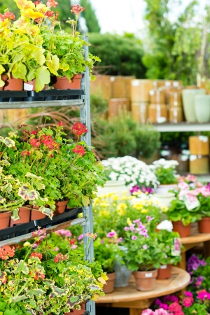 product range: Garden center green house with full range colorful potted flowers Stock Photo