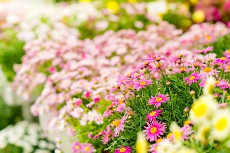 gamme de produit: Fleurs de printemps dans le choix de jardin � effet de serre centre de plantes en pot
