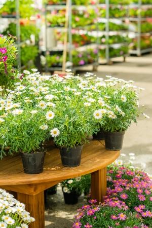gamme de produit: Pots de fleurs sur la table dans magasin de jardinage � effet de serre centre