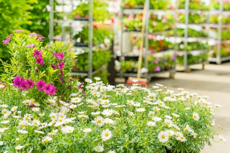 Green house shop with potted flowers at garden centre photo