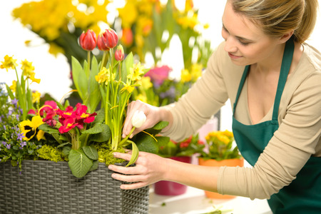 Florist arrange spring flowers colorful potted plants garden shop photo