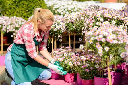 garden center: Garden center woman worker kneeling by pink potted flowers sunny