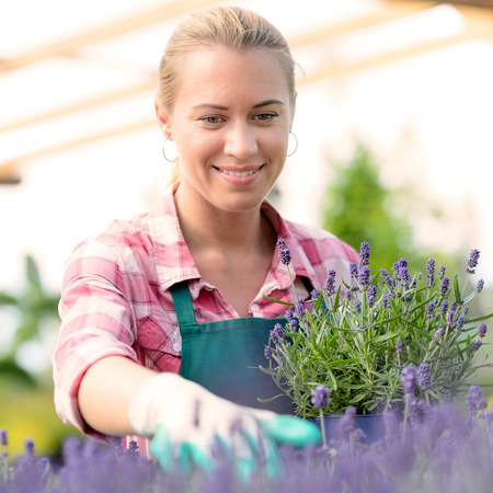 Garden center woman worker with lavender potted flowers flowerbed greenhouse