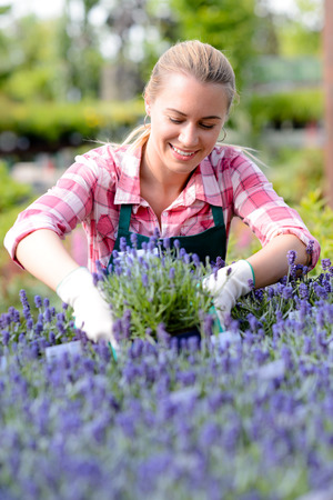 Potted plants: Garden center woman worker looking down at lavender flowerbed smiling Stock Photo