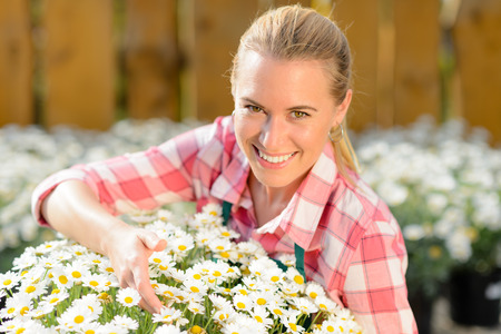 Smiling garden center woman worker with potted daisy flowers sunny photo
