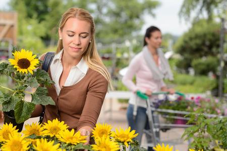 Woman customer choosing potted sunflower in garden center