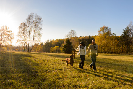 mature couple: Mature couple holding hands walk retriever dog autumn sunset countryside meadow