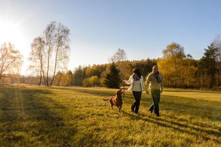 Mature couple holding hands walk retriever dog autumn sunset countryside meadow