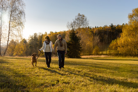 mature men: Mature couple walking retriever dog autumn sunset landscape holding hands