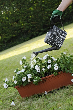 watering pot: watering pot with flowers