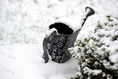 雪で覆われた庭に水をまく