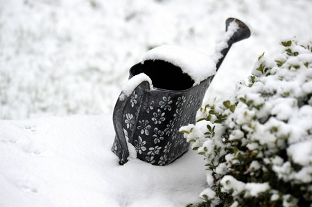watering in the garden covered with snow