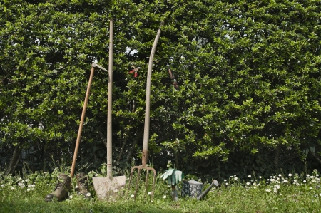 hoe: gardening tools leaning on hedge