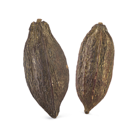 two cocoa pod on white background