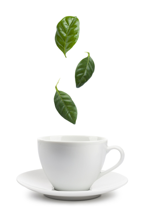 tea leaves falling into tea cup, on white background. Stock Photo