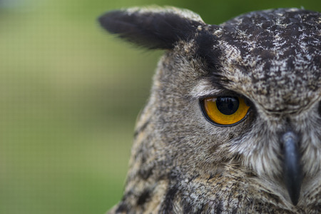 owl and her eyes Stockfoto