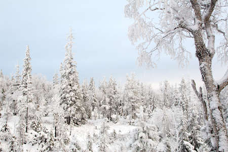 A quiet winter frozen forest. Alone frozen tree. Pastel colors.