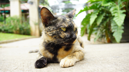 purr: A cat with black and orange color leans on the floor looks at its left side.