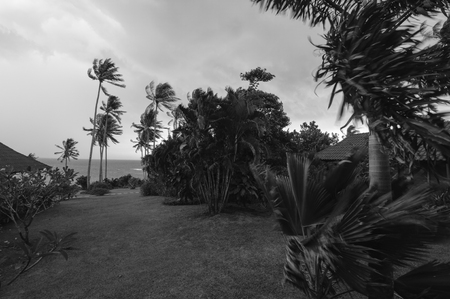 Trees blowing near the sea on a very windy day, black and white.