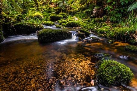 little creek is running through a forest