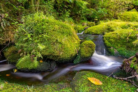 small creek through the forest Imagens