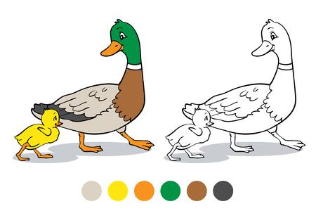 ぬりえブックまたはページ。母鴨とアヒルの子。マガモのアヒルと赤ちゃんアヒルの子。  イラスト・ベクター素材