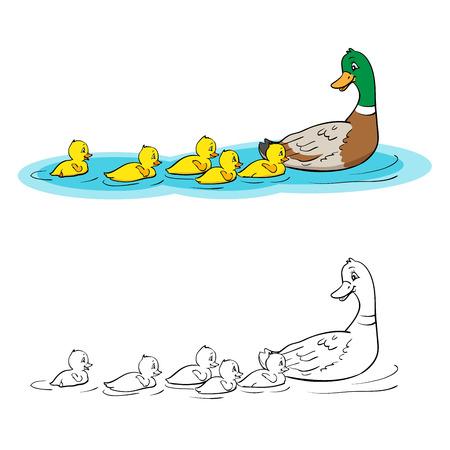 Libro Para Colorear O Página. Madre De Pato Y Patitos. Pato Y El ...